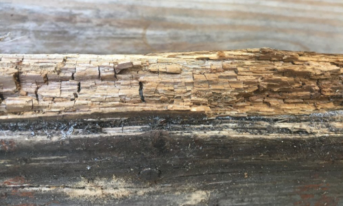termite rotted wood baltimore