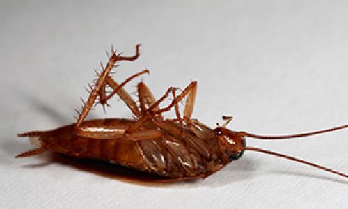 cockroach-control-exterminator-thumbnail